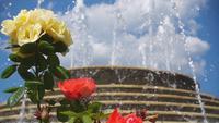 Roses et la fontaine