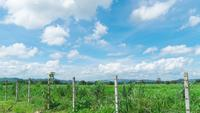 Gran campo de hierba verde con cielo azul brillante