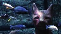 Egyptian Cat in an Aquarium