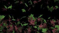 Folhas de plátano caindo Outono animação de fundo