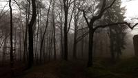 Dark Forest en kasteel in Misty Foggy Day