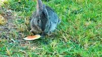 Dulce conejo comiendo