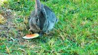 Sweet Rabbit Eating