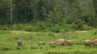 Elephants at Kui Buri National Park, Thailand