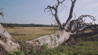 Ein toter und umgestürzter Baum