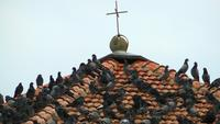 The Roof of the Church and Birds