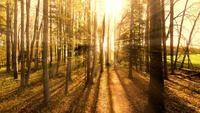 Reizen door bomen in een bos tijdens een heldere zonsondergang