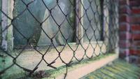 Kycklingtråd skyddar ett gammalt fönsterskjul