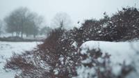 Kleine struiken in een besneeuwd landschap