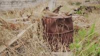 Um velho barril enferrujado, rodeado pela natureza