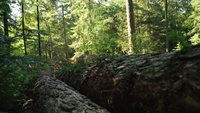 Baumstämme, die mitten im Wald liegen