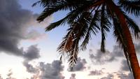 Palm with beautiful sky