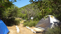 Instalación de carpas entre los arbustos en una isla