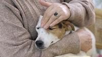 Oudere vrouw aaien haar hond hoofd met liefde