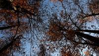 Spinnende bomen in de herfst seizoen