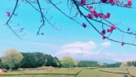 Vacker teplantage vid monteringen Fuji.
