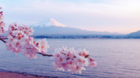 Mooie Cherry Blossoms en Mount Fuji in Japan.