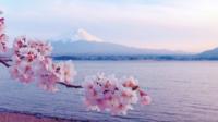 Cherry Blossoms e Monte Fuji bonitos no Japão.