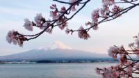 Mooie kersenbloesems bij Riverside, daarachter is de berg Fuji.