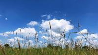 Pastagem e céu.