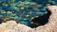 Trockenes Moos in der Nähe des Meeres
