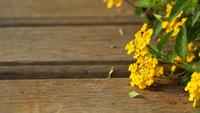 Cloth of Goldie Flowers on plank wood surface