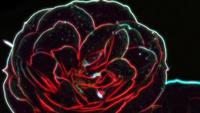 Rose néon vue rapprochée