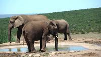 Elefanten in Chiangmai, Thailand