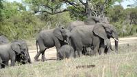 De majestätiska elefanterna i Chiangmai, Thailand