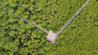 Aerial shot nature trail in Mangroves forest .
