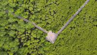 Vue aérienne du sentier nature dans la forêt de mangroves.