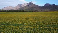 Vaste champ de tournesol jaune
