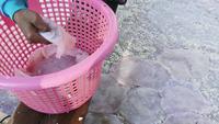 Fermentation jellyfish process