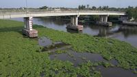 Crisis del jacinto de agua
