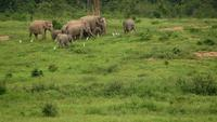 Elefantes animales fauna
