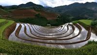 Campo de arroz em socalcos.