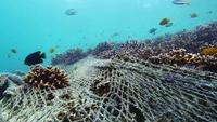 Coral reef destroyed by fish net