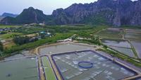 Fazendas de camarão na Tailândia. Foto aérea