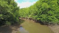 Gaan door een mangrove, Thailand