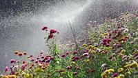 Bewässerung Blumen Zeitlupe
