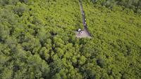 Mangrovenwald-Beobachtungspunkt, Thailand