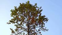 Árbol de otoño moviéndose en cámara lenta