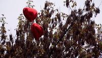 Red Heart Shaped Balloons on the Top of A Tree