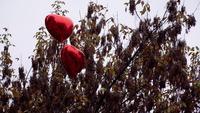 Ballons en forme de coeur rouge au sommet d'un arbre