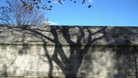 The Shadow Of The Tree On A Stone Wall