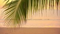 Zonsopgang met palmblad rond overzeese strandoceaan