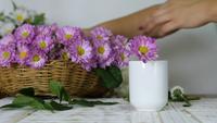 Hände, die violette Blumen nehmen, die in Vase setzen