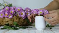 Lady som sätter violetta blommor i vit vas