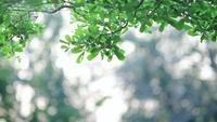 Wind weht grüne Blätter auf einem Ast.