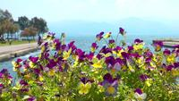Purple and Yellow Flowers and the Sea